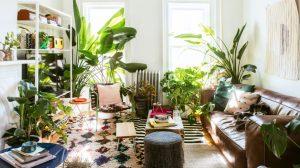 σαλόνι γεμάτο φυτά οφέλη φυτά διακόσμηση