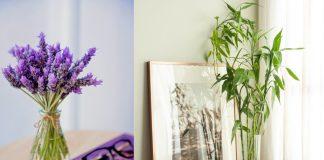 φυτά που φέρνουν θετική ενέργεια