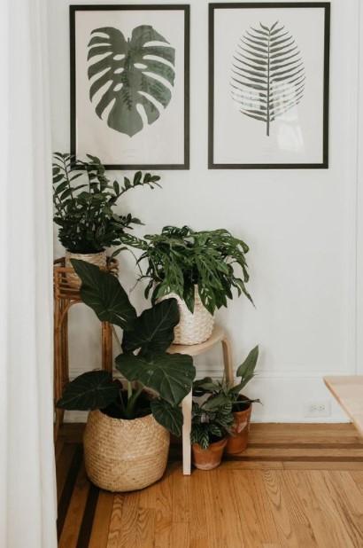 γωνία φυτά