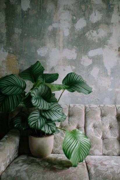 καλαθέα σκούρος τοίχος φυτά σκοτεινά σημεία