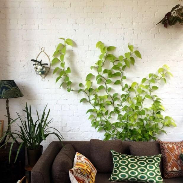 κισσός τοίχος σαλόνι