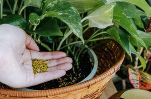 λίπασμα φυτό εσωτερικού χώρου
