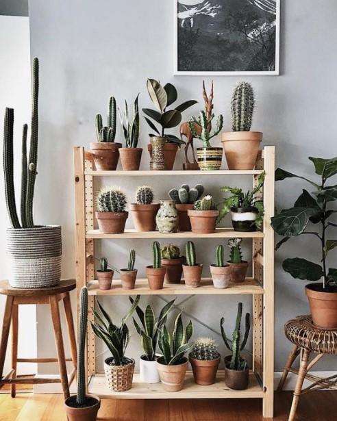 ραφιέρα κάκτους διακοσμήσεις φυτά κρεβατοκάμαρα