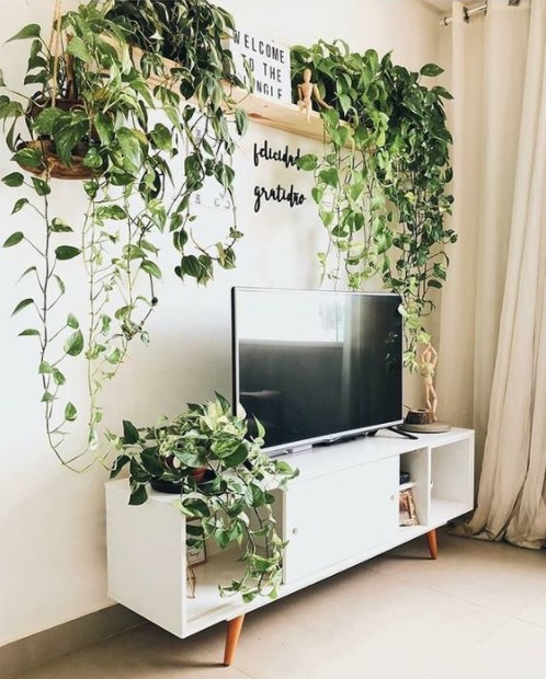ράφια πολλά φυτά τοίχος