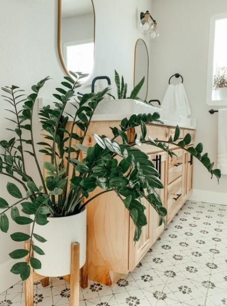 ζαμιοκούλκας μπάνιο πρασινάδες