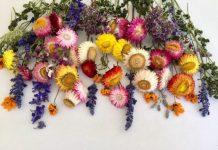 αποξηράνεις λουλούδια