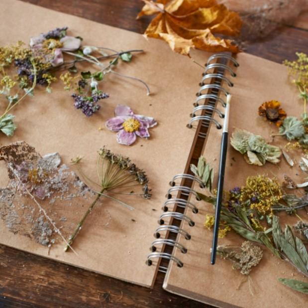 αποξηραμένα λουλούδια βιβλίο