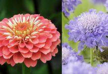 φυτά που βοηθάμε τις μέλισσες